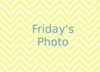 Friday's Photo