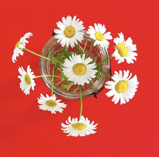 Daisies on red table