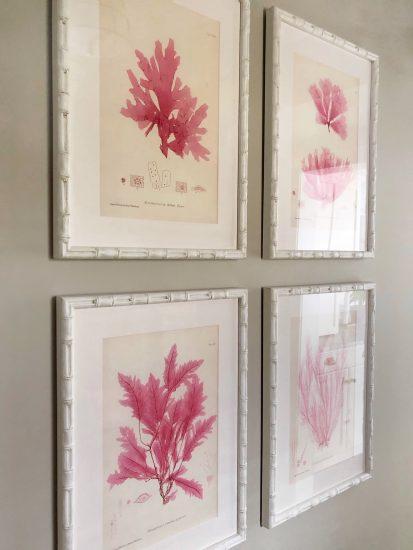 vintage coral prints