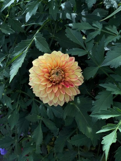 flower before photo editing