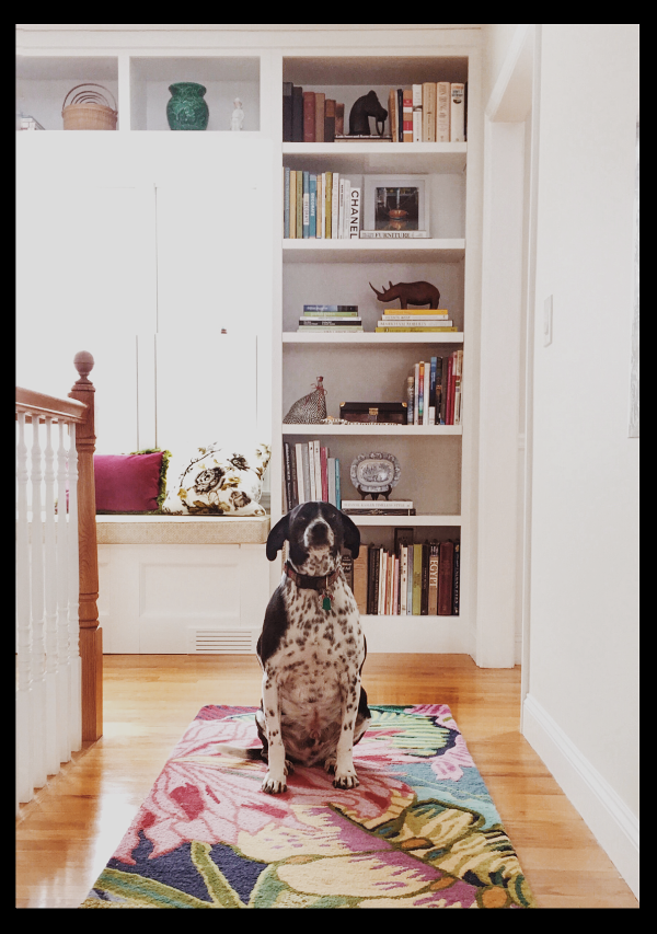Photographing pets and kids with the iPhone