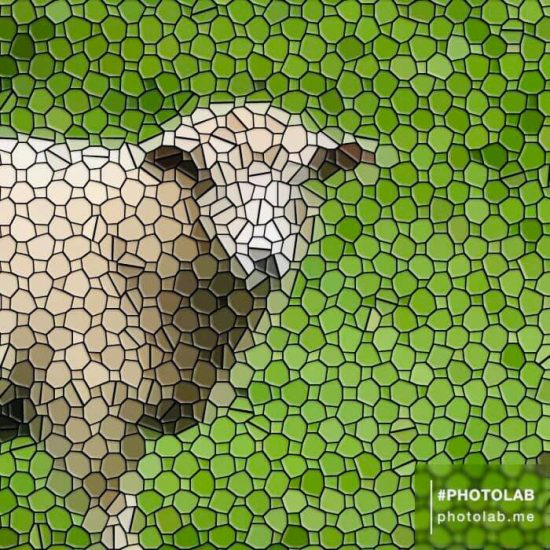 sheep transformed in PhotoLab