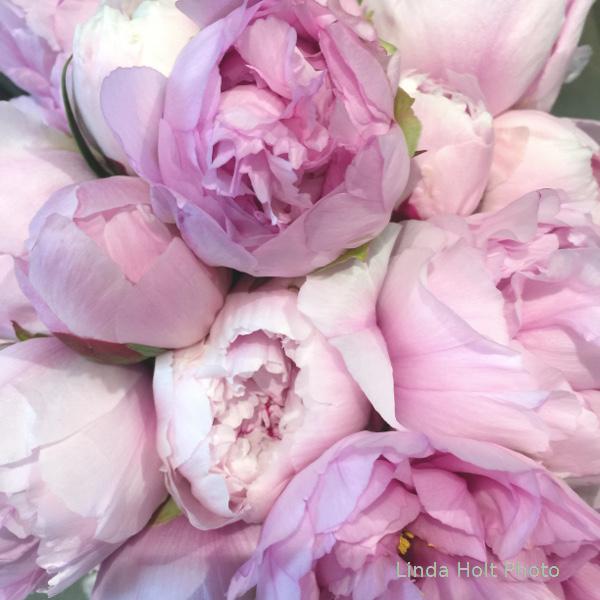 flower for blogWM