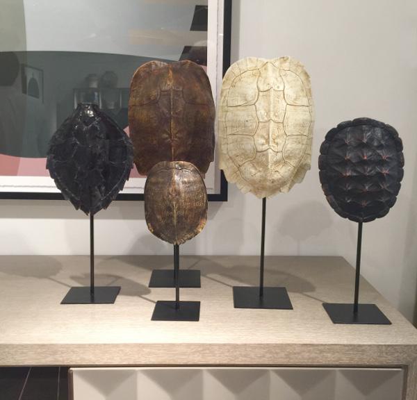 tutle shells